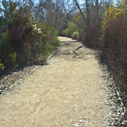 The sun and the natural color of the plants creates a rainbow effect on the pathway.  The present-day wildlife reserve is a product of several phases of development. The first effort in 1979 established the 48-acre riparian area south of Burbank Blvd. between the dam and The Los Angeles River. Formal establishment of the 60-acre habitat north of Burbank Blvd. between the dam and Haskell Creek in 1988 involved grading for the wildlife lake and extensive plantings of native annuals, shrubs, and trees. Pathways were created for educational and enjoyment purposes. The lake became filled with reclaimed water from the nearby Tillman Water Reclamation Plant in 1992. The latest and most extensive addition to the area is the 1998 expansion project funded by the U.S. Army Corps of Engineers adding an educational staging area and amphitheatre, various pathway/signage/viewing area improvements, new pedestrian bridges over and a reconfiguration and revegetation of Haskell Creek, additional native plantings, and the formal inclusion of 60 additional acres west of Haskell Creek to Woodley Ave.  The resulting 225-acre Sepulveda Basin Wildlife Reserve today is one of the finest refuges of its kind within a major urban area in the country. It serves not only as a restored natural habitat for wildlife but as a living laboratory for all to enjoy.
