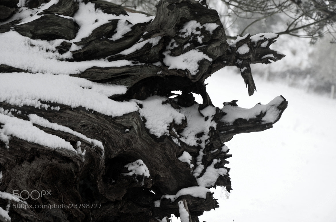 Photograph black and white snow on wood by Mo (Victoria) Bishop on 500px