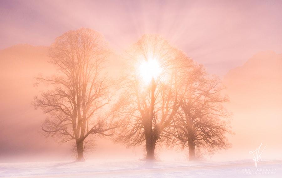 Sun Kiss by Arnd Kolleck on 500px.com