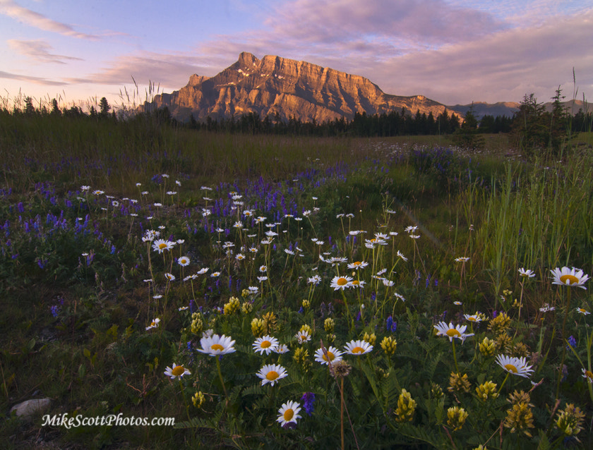 Photograph Rundle Wildflowers by MikeScottPhotos  on 500px