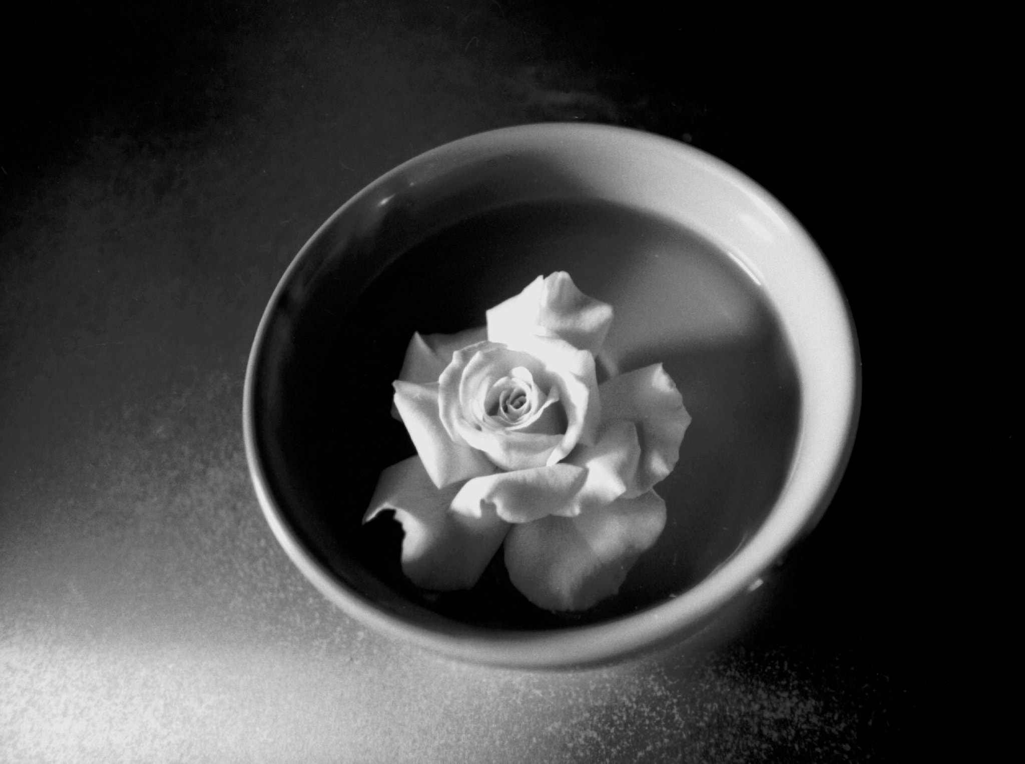 Photograph Rose by Brent Lewis on 500px