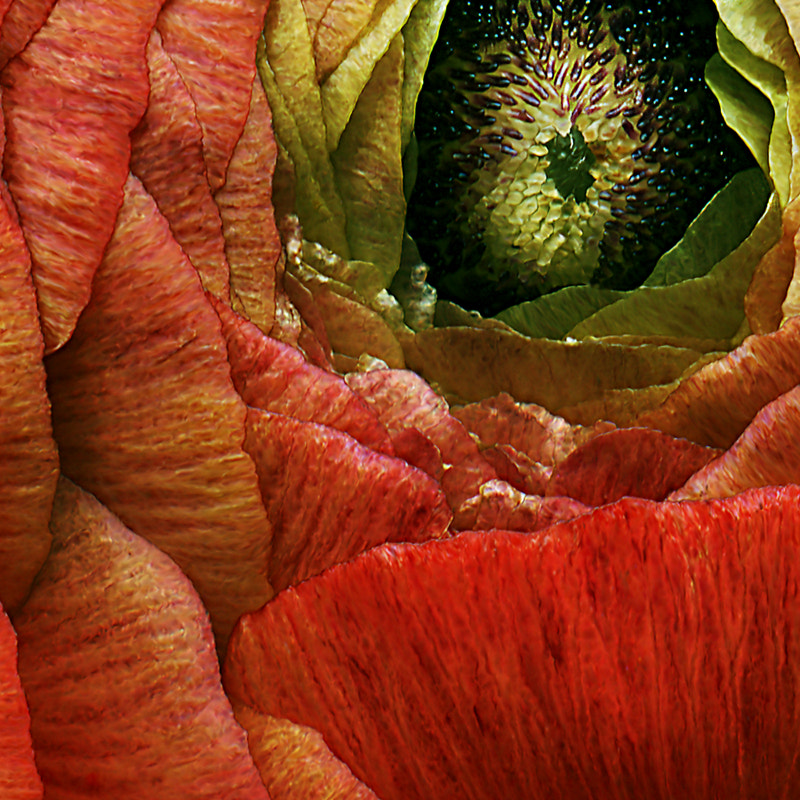 Photograph Tomate (detail) by Kate Scott on 500px