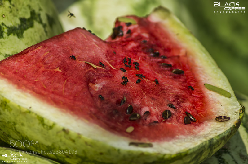 Photograph Tounge Melon by Ajith Mathew on 500px
