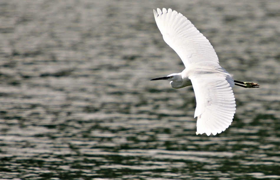 Photograph Flying by Imam Makhdy Hassan on 500px
