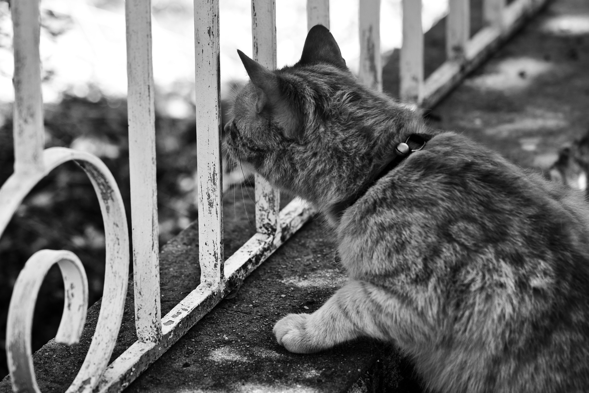 Photograph Tabby Cat B&W by Elouise  on 500px