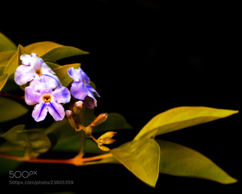 Photograph Flores by Adrián Armando on 500px