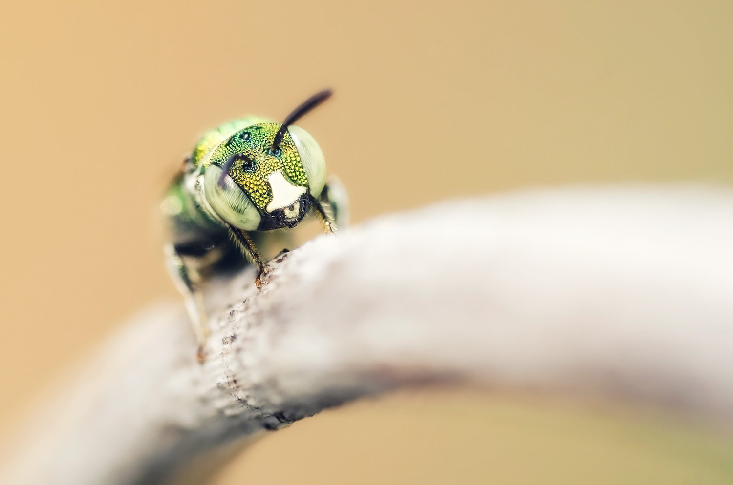 Photograph Little bee by Peerasith Chaisanit on 500px