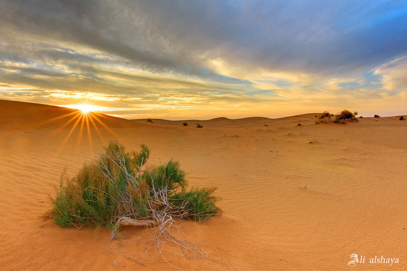 Photograph Sunset sand by ali-alshaya on 500px