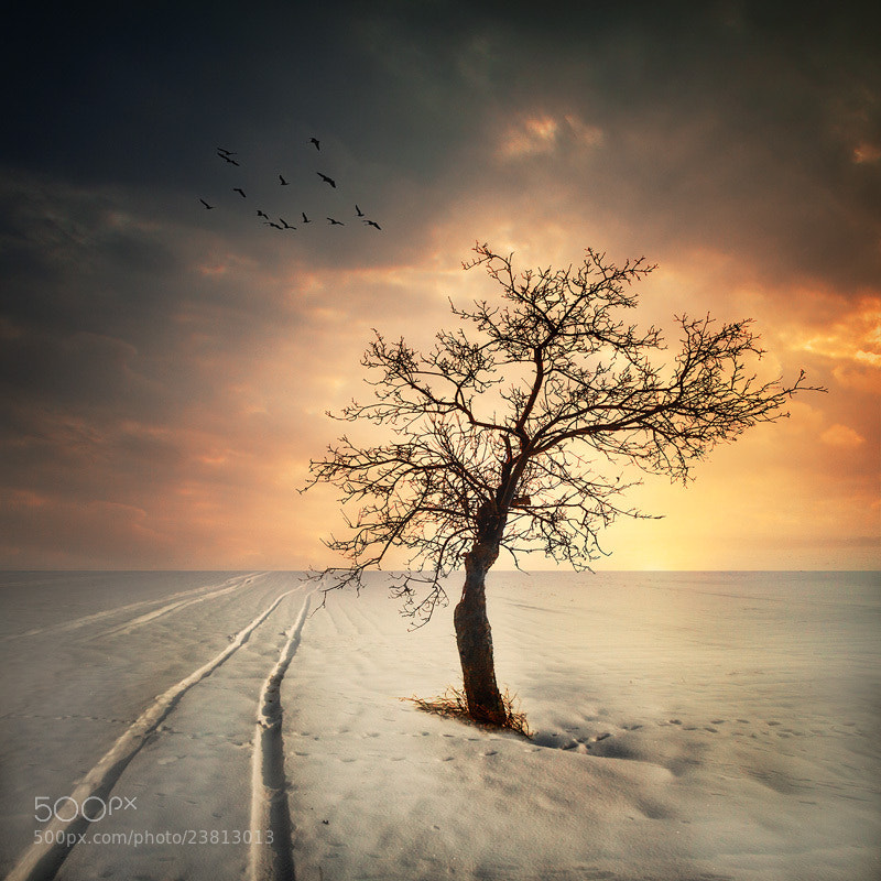 Photograph Winter time by Miroslaw Brzozowski on 500px