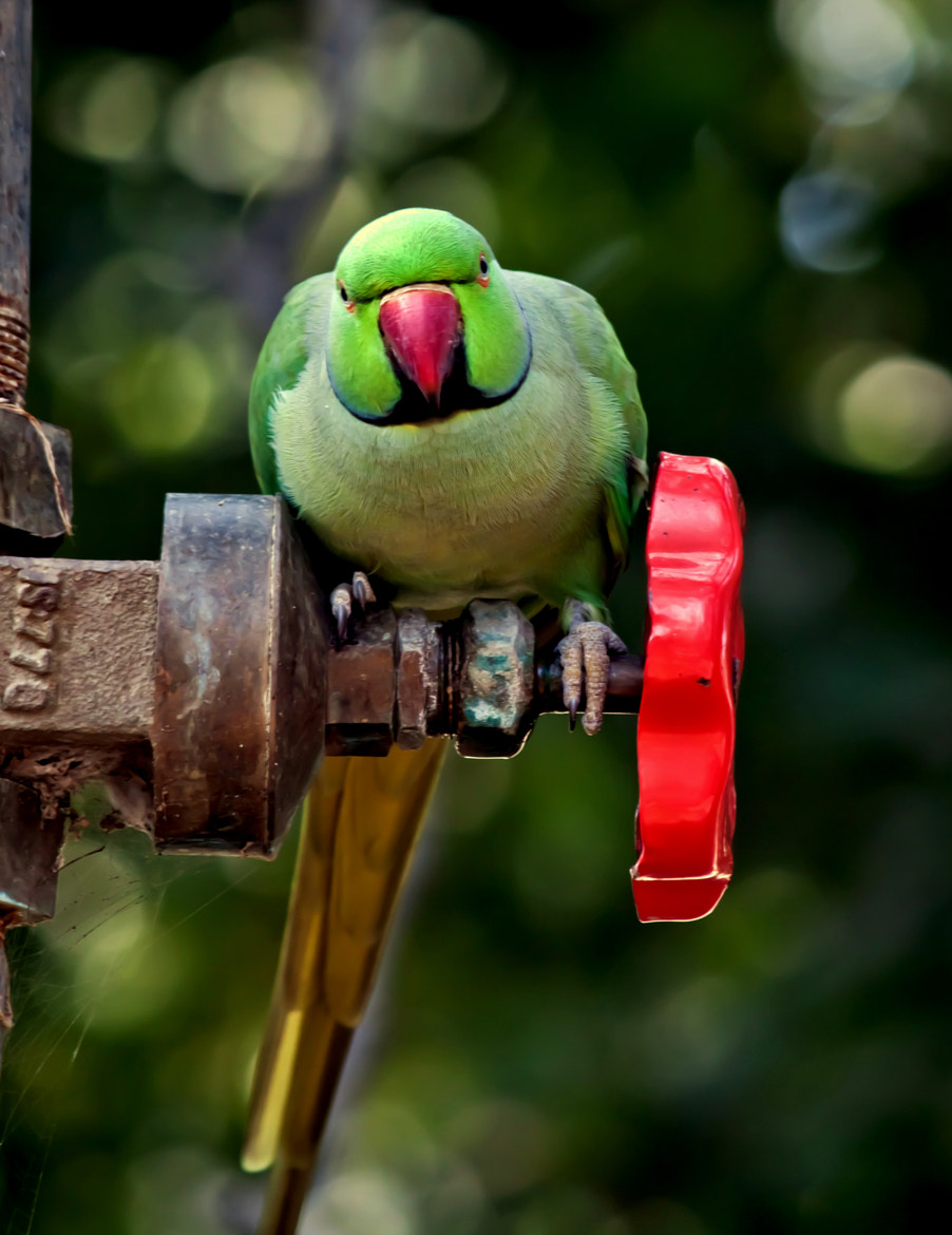 Photograph Is this pose fine?? by Samrat  Mukhopadhyay on 500px