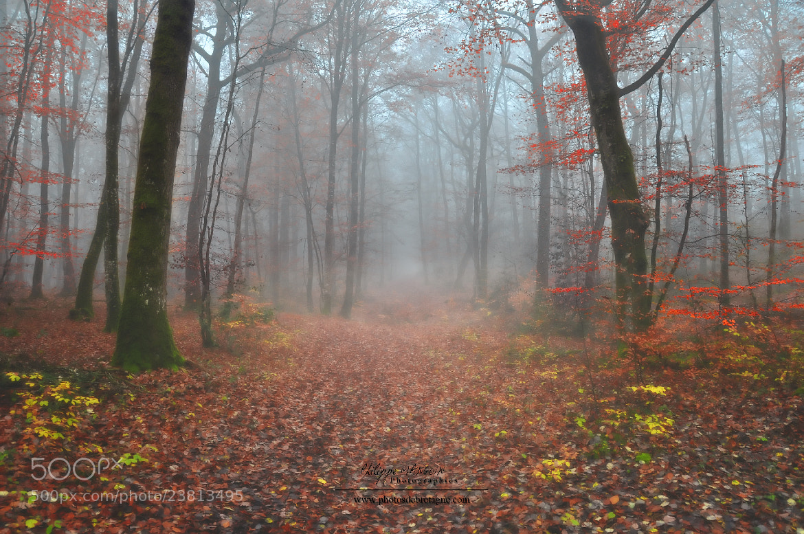 Photograph RED FOREST WALK by Philippe MANGUIN on 500px