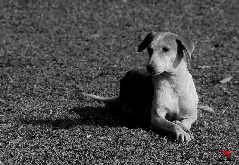 Photograph Kingship  by Rohan Pavgi on 500px