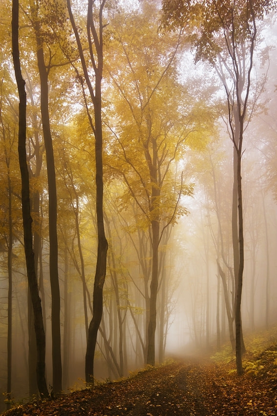 Photograph Autumn forest 6 by Daniel Řeřicha on 500px