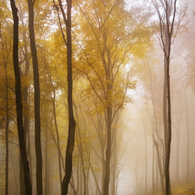 Autumn forest 6 by Daniel Řeřicha (Rericha)) on 500px.com
