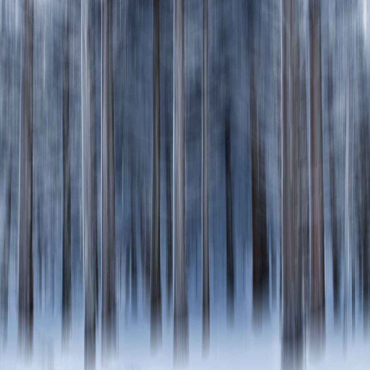 Photograph Trees #ICM  by Geoffrey Gilson on 500px
