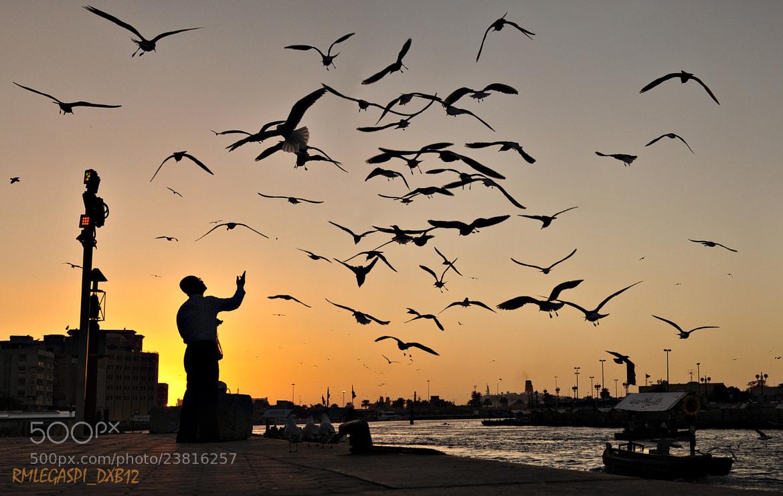 Photograph Man feeding flying birds by Randy Legaspi on 500px
