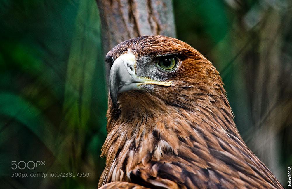 Photograph Big bird by Vladimir Popov / Uhaiun on 500px