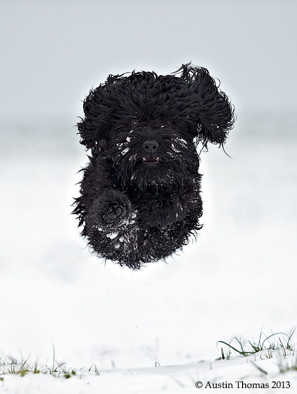 "Photograph An ""in flight"" dog... by Austin Thomas on 500px"