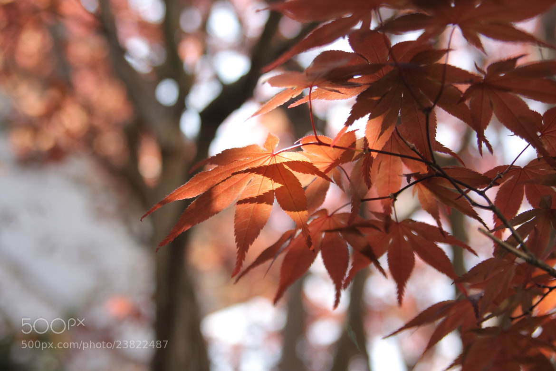 Photograph RED by Fumihiko Yoshitake on 500px