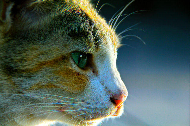 Photograph visioner cat by Alkris morris on 500px