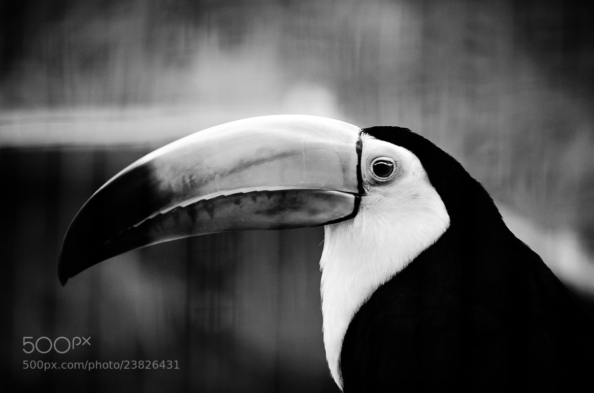 Photograph Tucan by Kenny  Alevxey on 500px