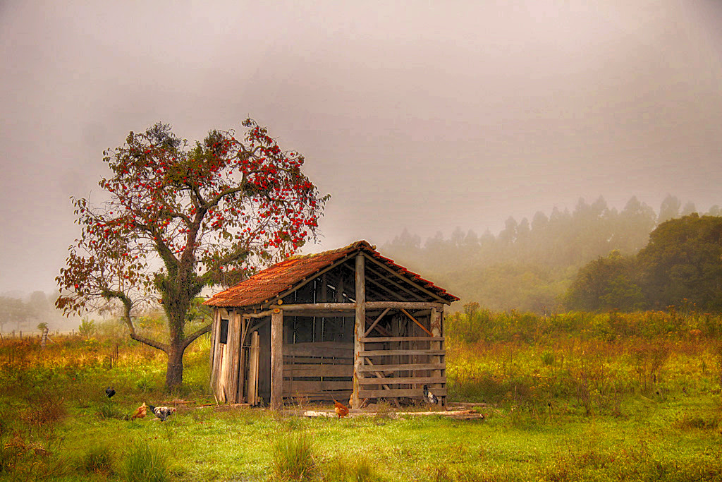 Photograph Rural Life ... by Alberto Nogueira Junior on 500px