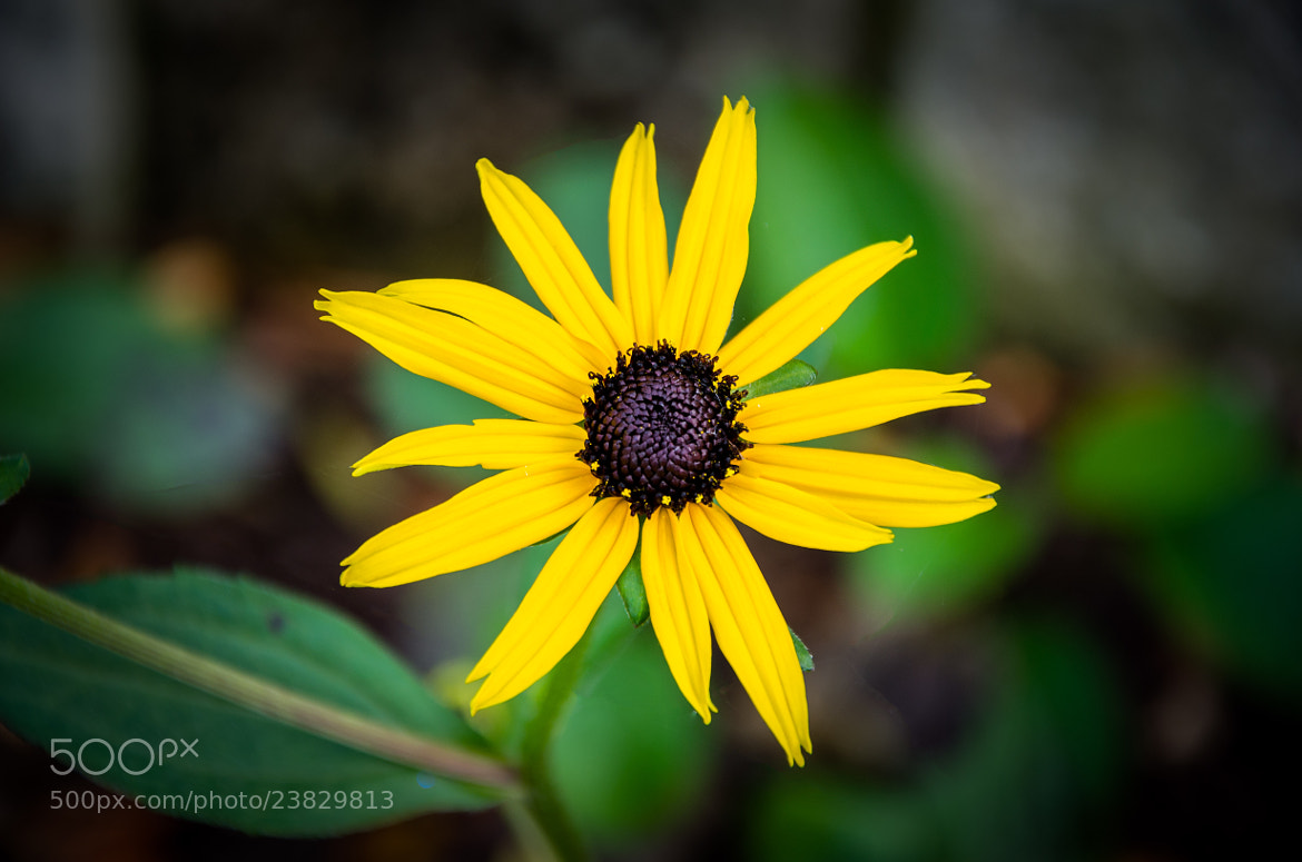 Photograph Yellow Flower by Kenny  Alevxey on 500px