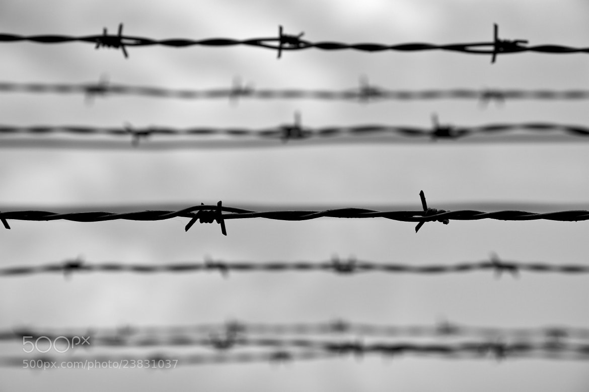 Photograph barbed wire by giorgino on 500px