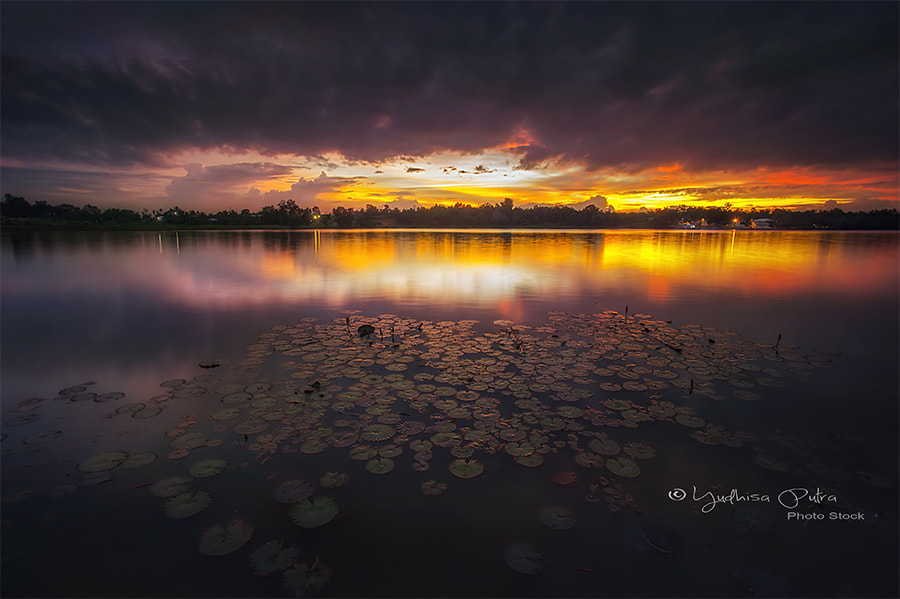 Photograph Twilight Lotus by Yudhisa Putra on 500px