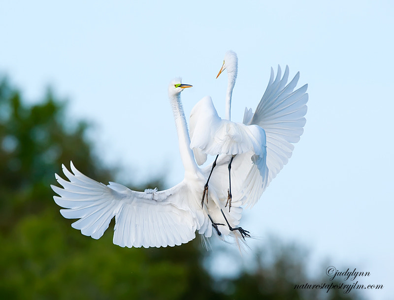 Photograph Altercation In The Sky !!!! by Judylynn Malloch on 500px