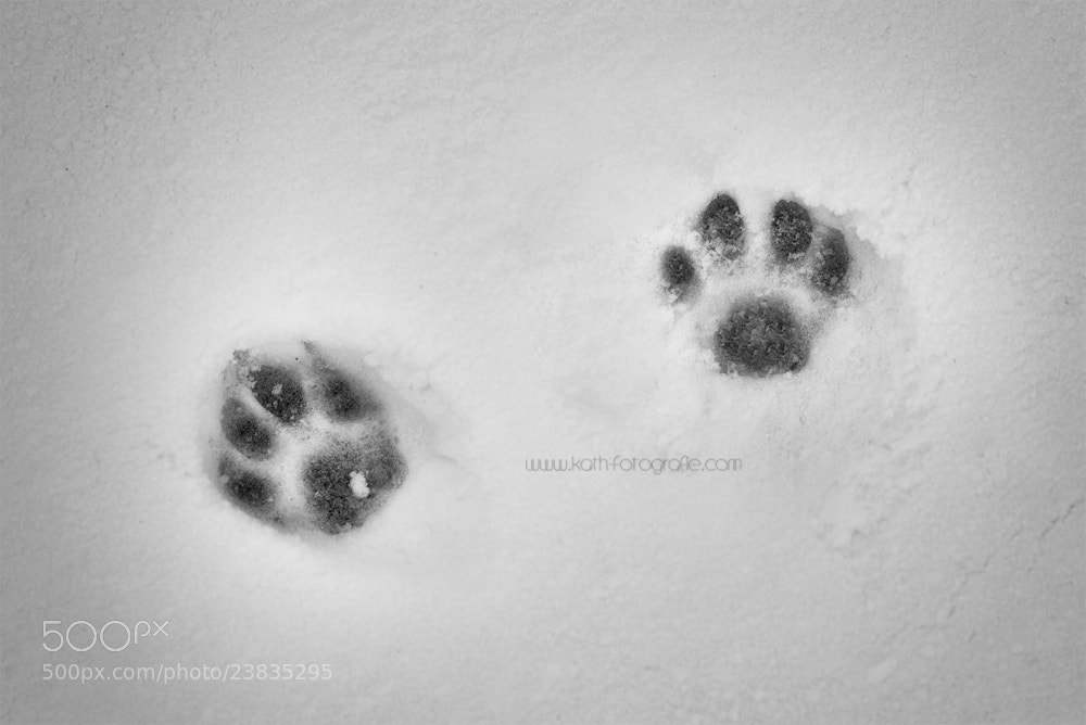 Photograph footprints by Kath´s Fotografie on 500px