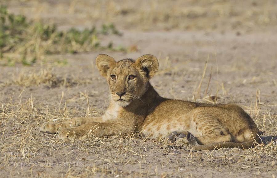 Taken in Ruha National Park, Tanzania, 8th September 2010
