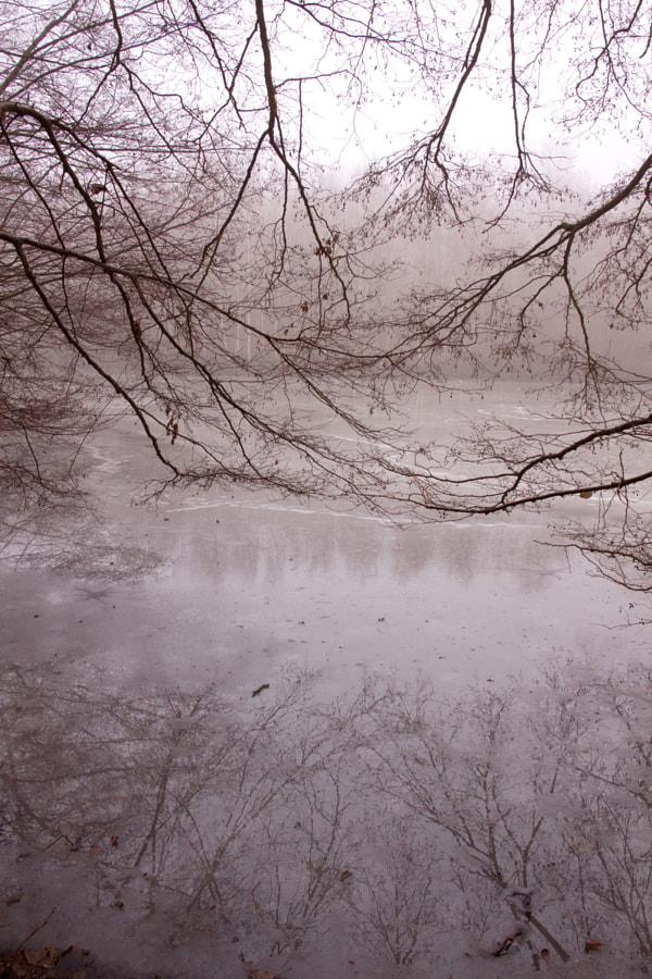 Hiver (winter) de Christine Druesne sur 500px.com