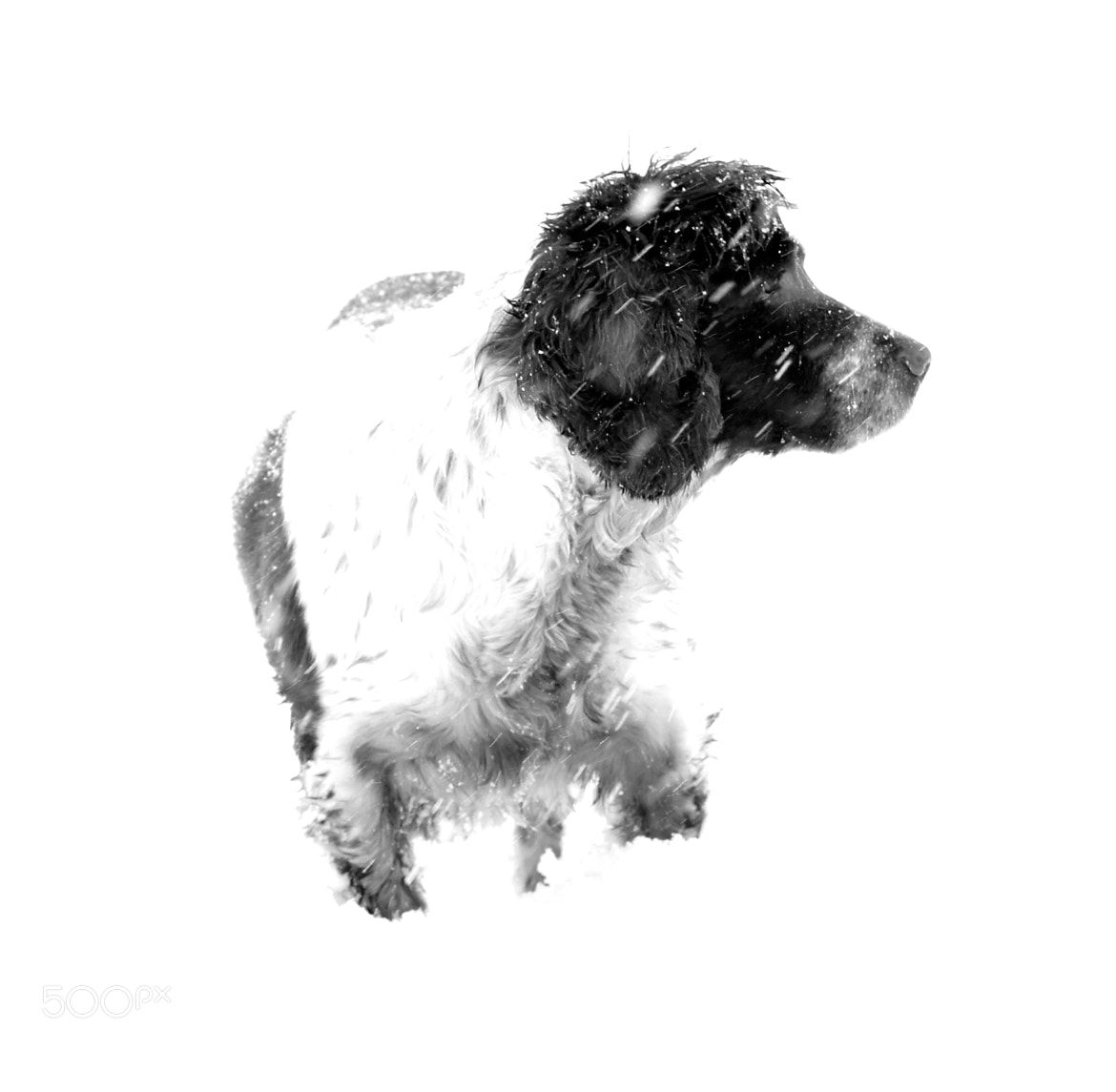 Photograph Paddy in a white out! by Anne Clark on 500px