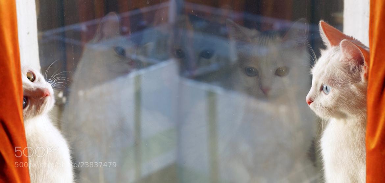 Photograph Athena cat by Spartak Kagramanyan on 500px