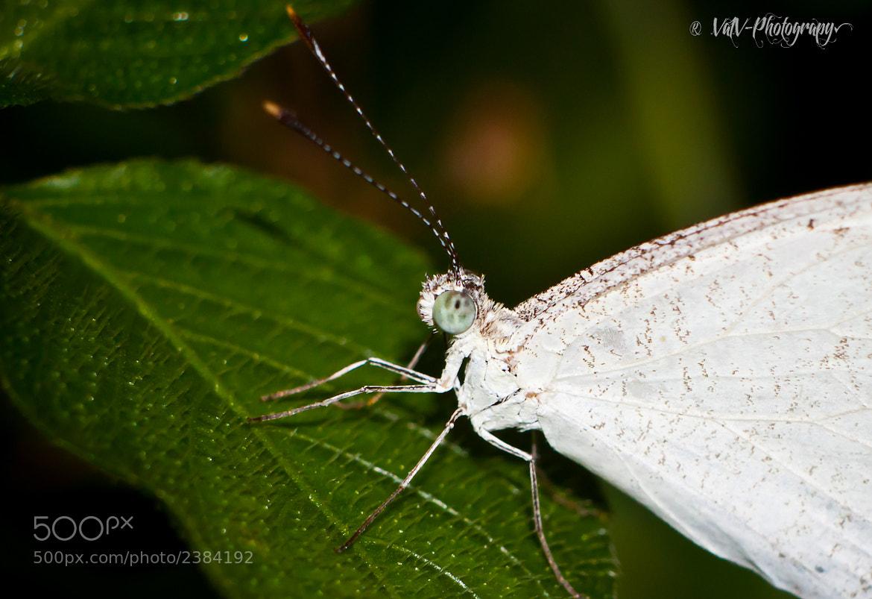 Photograph Gray Butterfly by Va Vachna on 500px