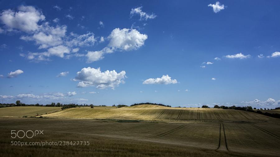 Light over the fields