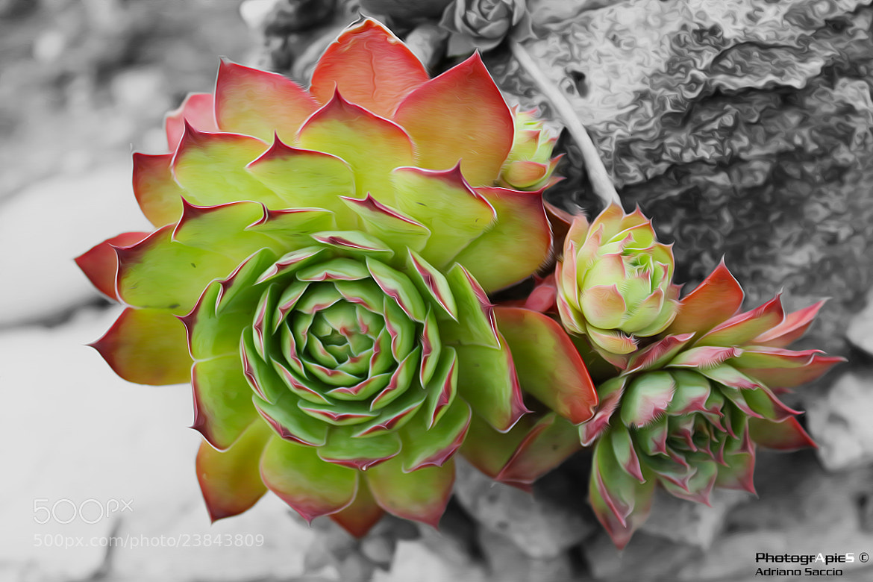Photograph cactus sun by Adriano Saccio on 500px