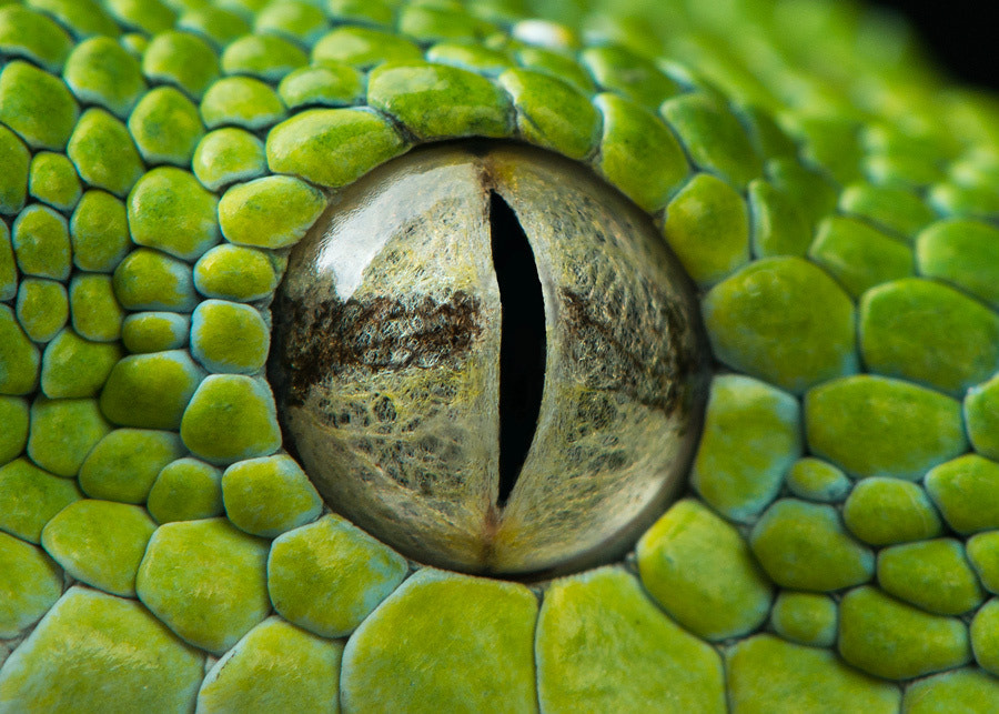 Photograph Snake Eye II by Henrik Vind on 500px