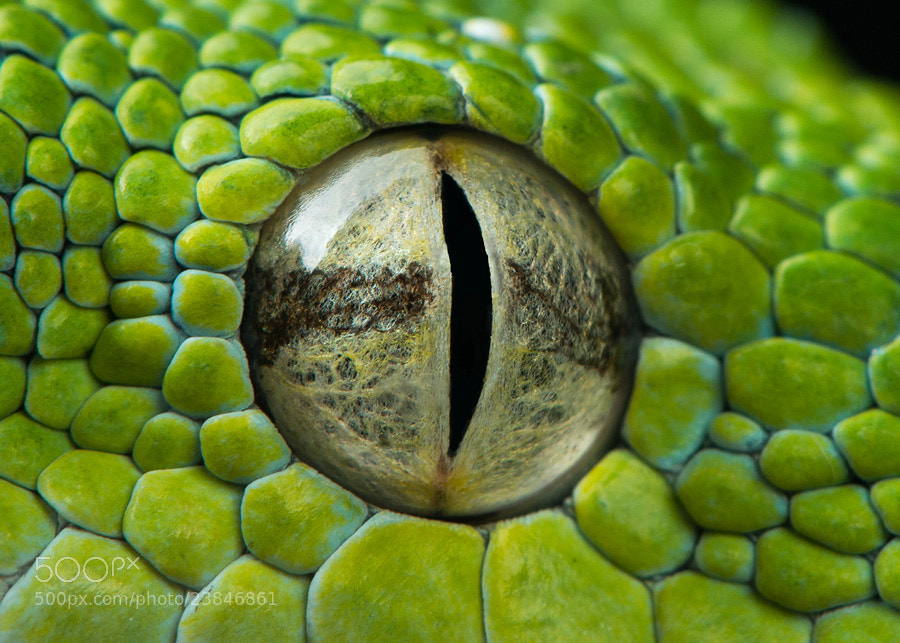 Photograph Snake Eye II by Henrik Vind on 500px