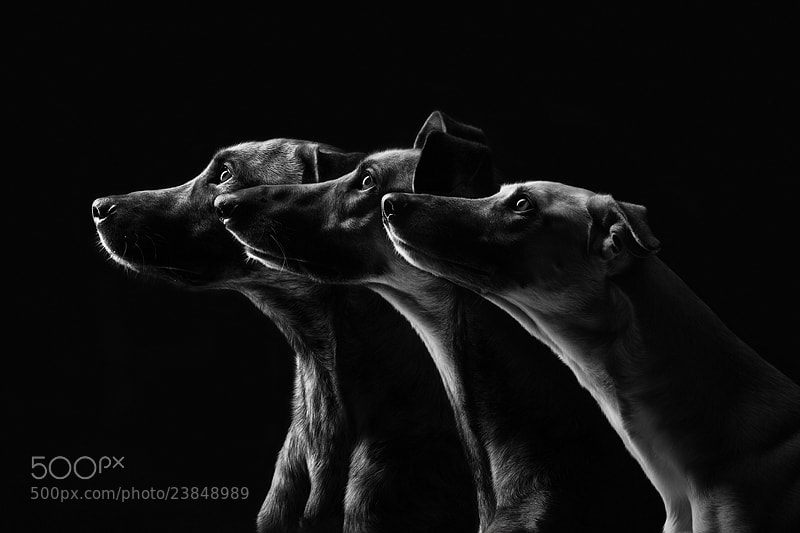 Dog photography - Photograph All the good dogs by Elke Vogelsang on 500px