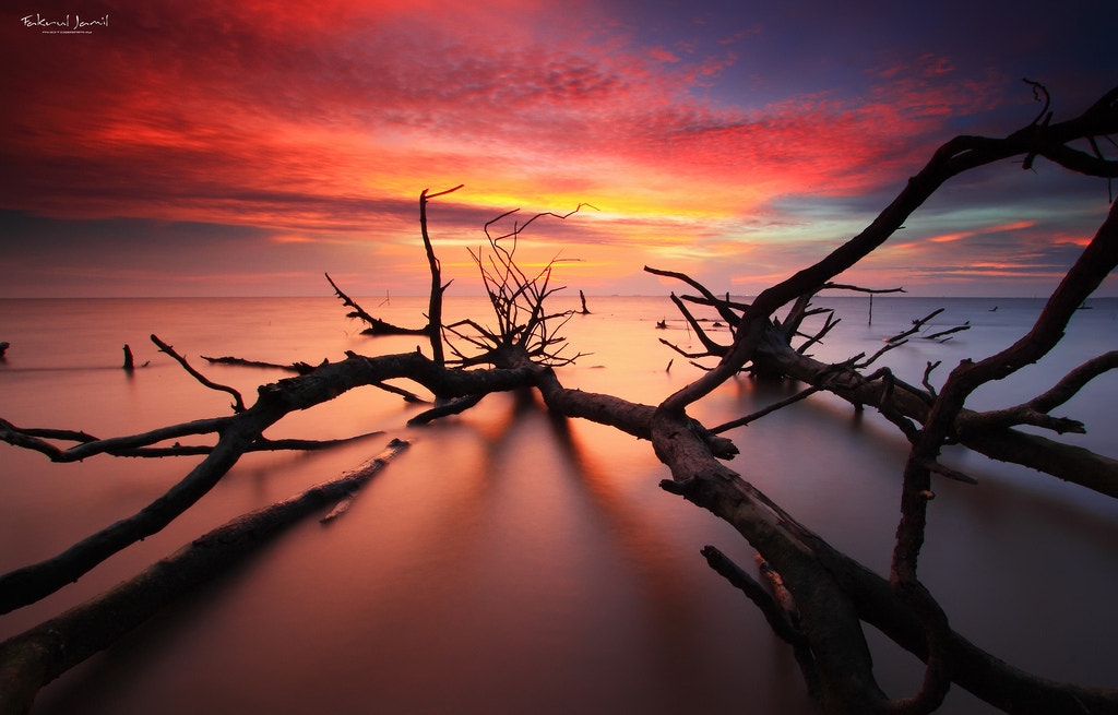 Photograph Everything's Dead by Fakrul Jamil on 500px