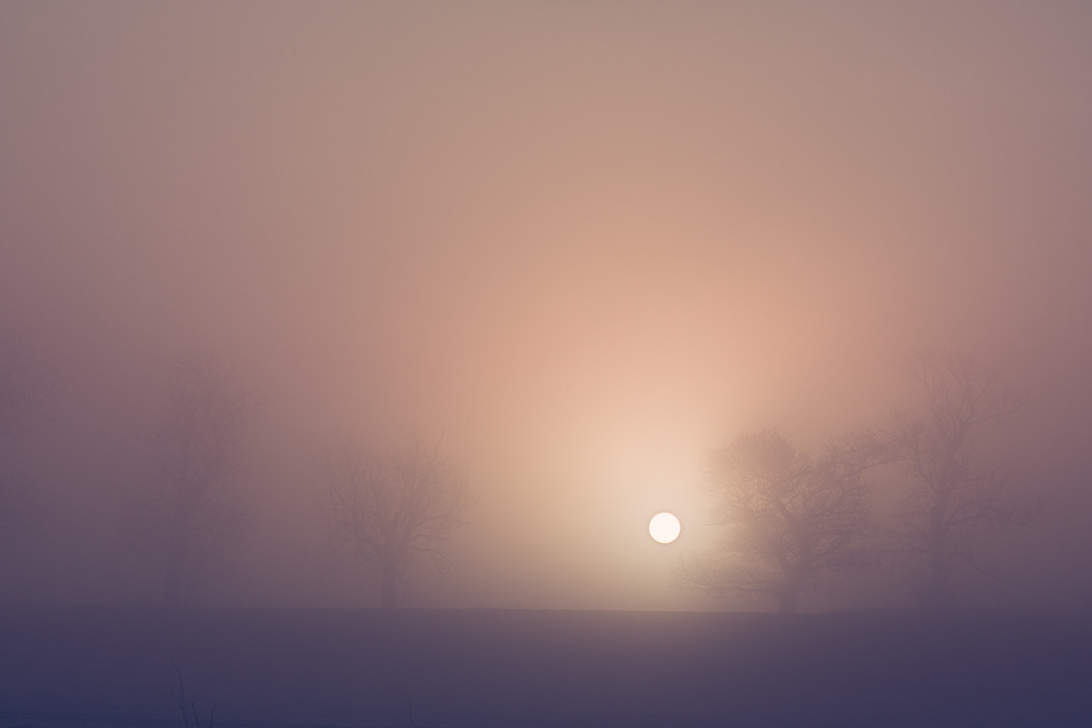 Photograph Early Morning Mist by Penny Myles on 500px