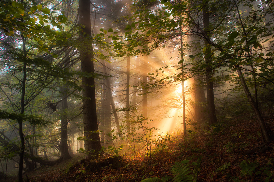 Photograph forest stories by Marcin Kesek on 500px
