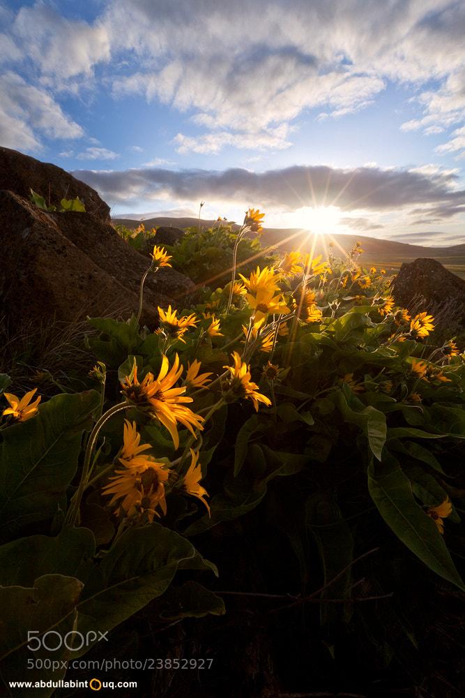 Photograph The Rising Sun by Abdulla Bin Touq on 500px