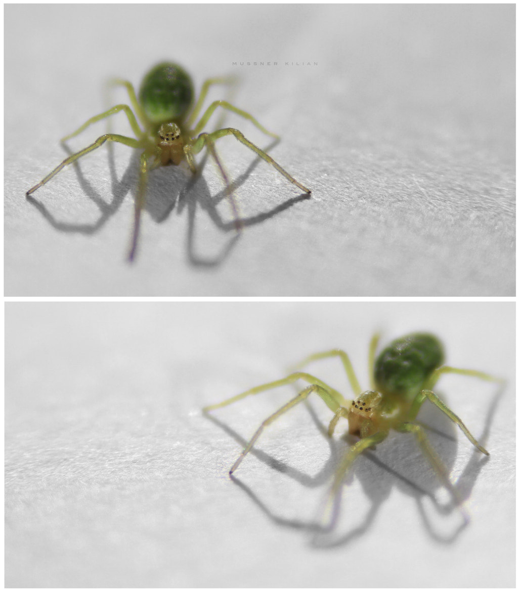 Photograph spider by Kilian Mussner on 500px