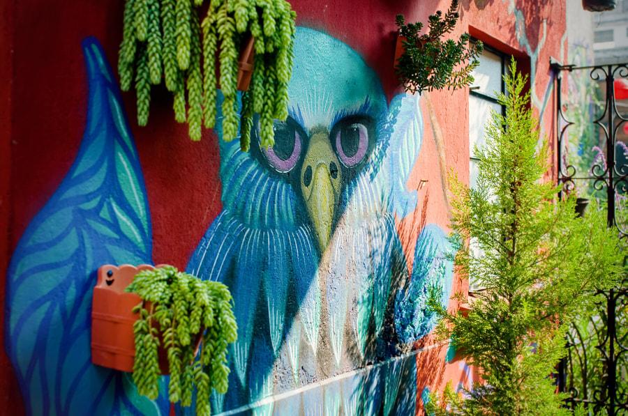 Airbnb Mexico City!! Rasta House by Cattiva Kat on 500px.com