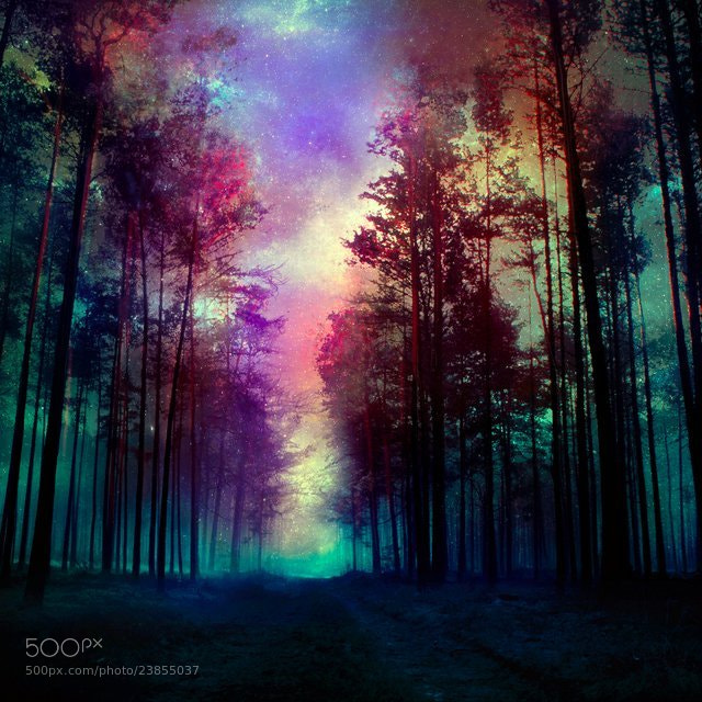 Photograph Magical forest by Barbara Florczyk on 500px