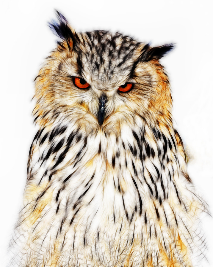 Photograph Owl by Geoffrey Gilson on 500px