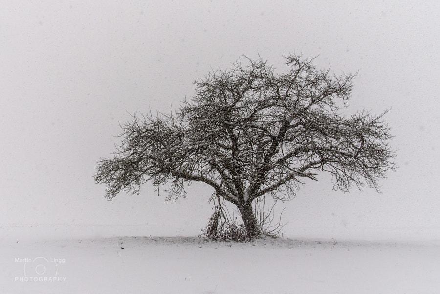 Snowfall, автор — Martin Linggi на 500px.com